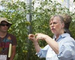 University of Arizona Intensive Course will focus on hydroponic greenhouse tomato production