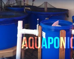 UVI Aquaponics Workshops in 2015