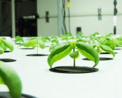 Indoor Harvest Corp CLARA Vertical Farm Project in Texas