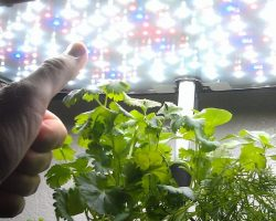 Indoor Vertical Farming 2015: What I've Learned by Jim Pantaleo