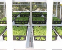 MICROGREENS… Not Only Healthy and Delicious, But Fun to Grow