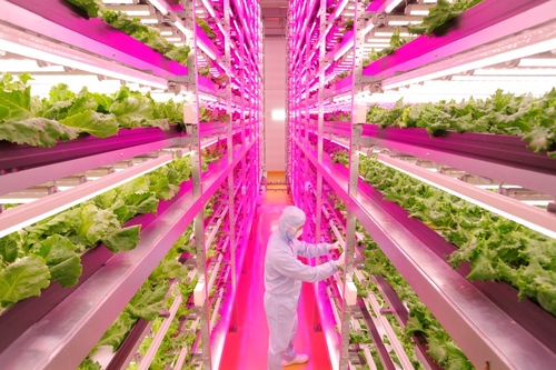 Lettuce See The Future: LED Lighting Helps Farming Go High-Tech In Japan