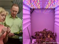 Greenhouse and horticulture lighting online course registration opens June 1