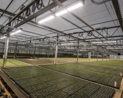 Fluence Bioengineering Achieves Breakthrough in Horticulture Lighting Efficacy According to University Studies