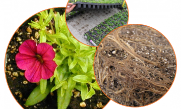 Online fertilizer training course from University of Florida begins on July 18