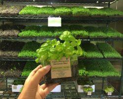 Urban Produce Opens Organic Farm Store