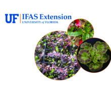 University of Florida Greenhouse Training Online courses new dates announced