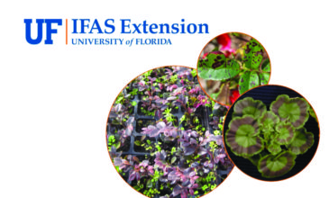 Earn Continuing Education Units with Weed Management at the University of Florida