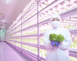 Japanese food producers harvest the benefits of vertical farming with special LED lighting