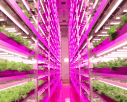 LED Lighting for vertical farms, multilayer production systems, propagation and tissue culture laboratories –  Arize™ by Current powered by GE