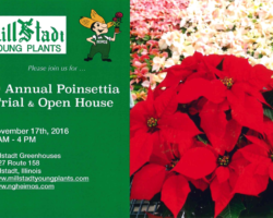 Millstadt Young Plants and N.G. Heimos Greenhouses hold their 9th Annual Poinsettia Trial and Open House