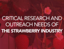 The National Strawberry Sustainability Initiative (NSSI) leads a critical research survey