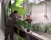 Modular Farms creates portable industry leading hydroponic growing technologies