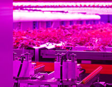 Urban Crops announces corporate name change to Urban Crop Solutions
