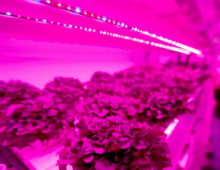 The Dallas Morning News features Dallas' Central Market for growing their own salad