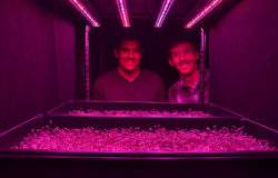 Horticulture industry optimistic about potential of LEDs