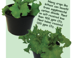 Maximize your plants' growth with supplemental CO2