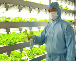 Japan Plant Factories are providing a safe, reliable food source