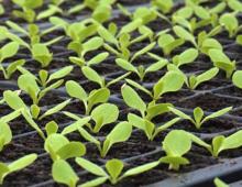 Grow-Tech to join Dümmen Orange