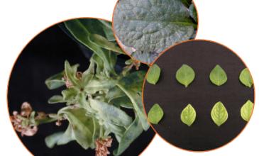 University of Florida Greenhouse Training Online courses Advanced Nutrient Management (Level 2) 2017