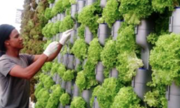 September Johannesburg Summit on Launching Successful Commercial Indoor Farming in Africa and its Cities