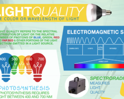 Which wavelengths of light are the most effective in photosynthesis?