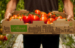Village farms uses technology to increase efficiency & produce better crops