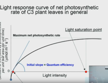 CEAC Greenhouse Plant Physiology and Technology Course – Week 2-2