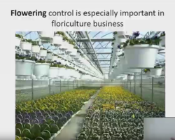 CEAC Greenhouse Plant Physiology and Technology Course – Week 3-1