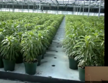 CEAC Greenhouse Plant Physiology and Technology Course – Week 6-1