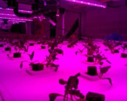 Local by Atta rebuilds vertical farm with GE LEDs after devastating fire
