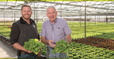 Crop diversification helps ensure Westland Orchids and Westland Produce stay profitable