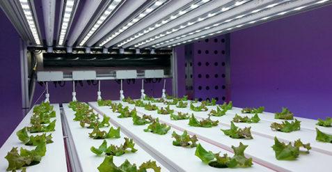 Meeting the environmental challenge of growing food crops