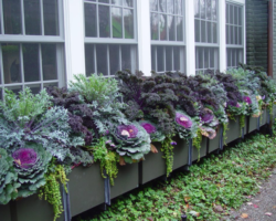 Considering growing edible potted crops?
