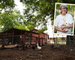 Urban agritourism brings extra farm revenue